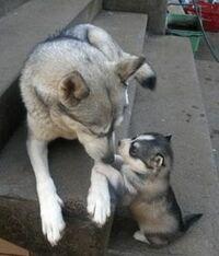 子犬がお母さんにおねだりをしていますか?
