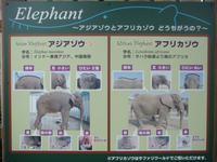 アフリカゾウとインドゾウは子は一代雑種になってしまいますか? 動物で近い種同士を交配させても、染色体数の違いなどから、多くは一代雑種となってしまうとか聞きました。 それ以上子孫を残せないとも。  そ...