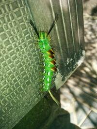 幼虫画像 閲覧注意! 蛾の幼虫が玄関先にいました。 大きさは7cmほどです。  回答お願いいたします。