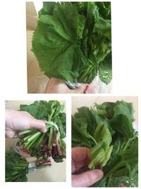 至急お願いします! 秋田の知人から山菜をいただきました。アザミと言っていましたが、画像を検索したら、どうも違うと思うのですが…葉の形状はギザギザのハート型。新芽には産毛があります。 茎はフキのように大きな穴があります。添付画像をご覧ください。 これは何という山菜でしょうか?山菜に詳しい方からのご回答よろしくお願いします。