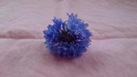 この花の名前を知りたくて 自分でも調べたのですが ・ニゲラ ・矢車菊 もしくはそれ以外の種類でしょうか?  どなたか御存知の方が いらっしゃいましたら お願いします