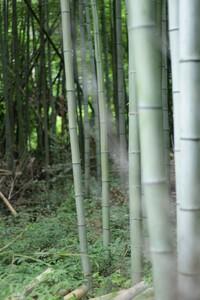 心霊写真疑惑の写真が撮れたため解析をお願いします。  写真を撮ったのは大阪の地震があった当日、6/18の午前6時頃で京都の嵐山の竹林です。今思うと地震の前兆だったのかもしれないと勝 手 な思い込みをして...