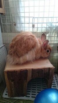 このウサギの毛並みどう思いますか?