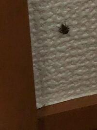 このクモは巣を作らないクモですか? 殺さないほうがよいですか?