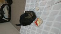 飼い猫がエサを食ってくれません どうしたらいいですか?