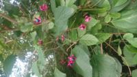 植物に関する質問です。 道端で見つけた植物なのですが、これは何という植物でしょうか? 不思議な色合いなので気になってしまいました。   自分で調べてみてもちょっと分かりそうにないので、ここで質問させても...