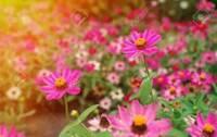 花について。この花の名前を調べていますが分かりませんでした。  どなたか花の名前がわかる方 教えていただけませんか。 よろしくおねがいいたします。  画像はインターネットのもの で す。