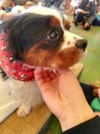 先日、筑波ワンワンランドにて、一目惚れをしてしまったわんちゃんがいたのですが犬種を確認するのを忘れてしまいまして。どなたかご存知の方がいらっしゃいましたらよろしくお願いします。