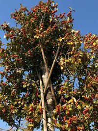 この樹木名教えてください。 宜しくお願い致します。