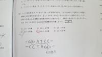高校生物の問題です。解き方、考え方を教えて下さい。BamHIは制限酵素のことです。