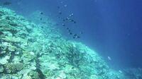 沖縄でビーチエントリーのシュノーケル(素潜り)について。 西表島、宮古島、慶良間諸島 の中で1番素晴らしい海はどこだと思いますか? 自分の中では西表島の中野ビーチが素晴らしかったので、再度訪問するか別...