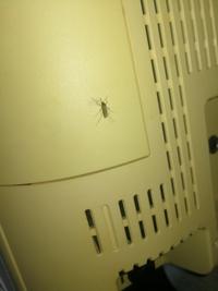 画像のような虫のせいで一睡もできませんでした。 モスキート音+刺してくるので蚊かな?と思ったのですが蚊のようには見えませんでした。  1匹ならまだしも10数匹くらいいます。 この虫は一 体なんでしょうか?また、対処法をお願いします!!