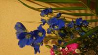 写真の青い花はなんていう名前の花ですか?