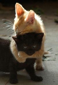 【自由帳】 Stay stay with me.この猫ちゃんは『ずっと、お前を話すもんか!』と、そこらじゅうの女の子(猫)に決めゼリフで落としているのですか?スケコマシなんですか? ネコにゃん♬