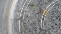 メダカの屋外飼育で質問です メダカの稚魚を屋外の睡蓮鉢で飼育しています  画像のような生き物がいたのですが稚魚になにか影響はあるでしょうか?
