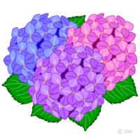 紫陽花というフレーズから思い浮かぶ曲は なんでしょうか?