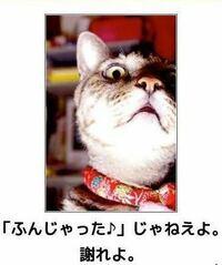 【自由帳】 最近は常識やマナーを知らない人が多過ぎる様に思えませんか?この様な猫さんの様に注意・勧告してくれる方が増えると良いのですが難しいでしょうか? ネコにゃん♬