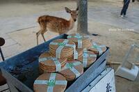 広島県宮島では、鹿せんべいは販売されないのですか? 奈良公園みたいに。  奈良に住んでいたころがありまして、奈良公園でたまに鹿せんべいを購入して鹿たちにあげてました。  でも、広島県宮島でもたくさんの鹿たちがいますよね。でも鹿せんべいは販売されてないようです。  これはなぜでしょうか? 宮島では鹿せんべいを販売したり、鹿に挙げてはいけない理由とかがあるのですかね。  そこらへ...