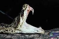 毒蛇やコブラには、大きな牙があるイメージですが、このようなあからさまな牙のない毒蛇もいるのですか?  また逆に、大きな牙がなくても毒のある蛇もいますか?  日本種ではなく、世界的に見てです。