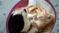 新人猫を暖める汚らしい先住猫は好きですか?