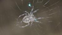 でっかいクモがいました。2cmくらいです なんていうクモなんでしょうか名前知ってたら教えて下さい