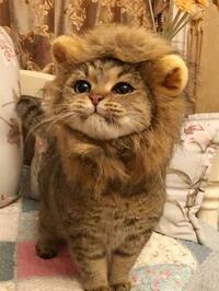 ライオンって百獣の王なんて呼ばれてますが、実際自然界で最強と言っていいほど強いんですか?