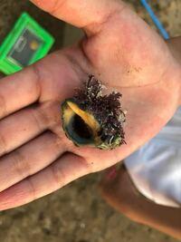 テトラポット付近で見つけた、この貝はなんという貝か、分かる方教えて下さい。 レイシガイかなぁと調べて思ったんですが、貝の周りが違う気もします。 詳しい方、お知恵をお貸しください!
