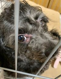 画像にある犬の病気について。 現在、初めての犬を飼っているのですが、  少し前(1、2ヶ月前)くらいから足を使って目をかきはじめ、  画像のように赤くなってしまっています。  症状は右目の周りあたりだけで、左...