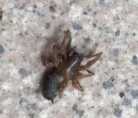 家具の隙間を掃除したら こんな虫が出てきましたが 何でしょうか? 夜中に虫に刺され 痒いです。