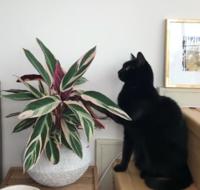 こちらの観葉植物の名前をご存じの方いましたら教えてください!