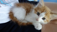 こんばんは この世に 赤ちゃん以外で 仔猫より可愛い生き物ぅて 存在するのでしょうか??