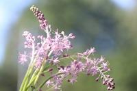 那須高原で見付けた花です。  名前を教えて下さい。  宜しくお願いします。