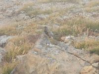 鳥の名前について教えてください。  この鳥は何という鳥でしょうか? 北アルプスの唐松岳~白馬岳の途中で撮影しました。  よろしくお願いします。