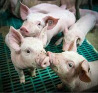 肉を食べる人は、なぜ動物たちの命を奪ってまで肉を食べたいと思っているんですか? 犬や猫が好きな人は下記リンク記事のように犬や猫が命を奪われ食されていても悲しくないんですか? https://toyokeizai.net/ar...