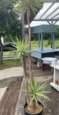 この植物の名前がわかる方いらっしゃいませんか? 屋外で育てる事はできますか?  三重県在住です