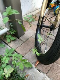 これはヤブガラシですか? 賃貸の自宅の駐輪場です。 自転車に巻きついて困っています。 少し前にも同じようになり管理会社に連絡したところ、おそらく地上の草だけ刈って行きました。 調べてみると、駆除が大変...