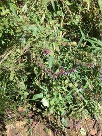 10月、高尾山周辺で見つけた以下の植物の名前を教えてください。