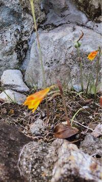 このオレンジ色の花は何ですか?