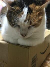 三毛猫10歳を室内で飼っております。 最近猫のためにコタツを出したのですが、見向きもせず‥何故かいつもダンボールの上に居ます。 寒いだろうと思ってコタツに誘導してもすぐに出てきてダンボールの上に乗っかっ...