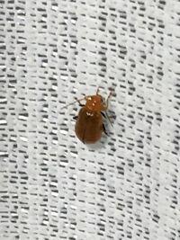 アパートに虫が出ました… 虫の名前と、人に影響はありますか?