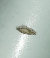 どうか教えて下さい。これは虫でしょうか? ここ最近部屋の中で糸屑か紙くずかと思ってたんですが、ある日先っちょから黒いのをちょこっとだけ出してうねうね歩いてるのを発見して気持ち悪くな りました。電気に...