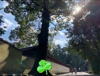 伊勢神宮で撮った写真です。 右上にある太陽の隣と、左下にエメラルドグリーンのオーブがあります。これはどんな意味があるのでしょうか? 角度を変えると少しずつ位置が変わったりしています 。 レンズの関係...
