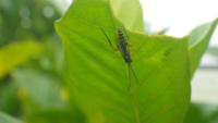 この昆虫の名前は何ですか? ヒメバチの仲間かと。