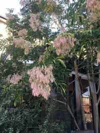 【植物】この花は何という花でしょうか?? 珍しい植物だと思いました。(⌒▽⌒)