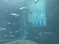 初デートに水族館ってどう思いますか? 誘われたら嬉しいですか?