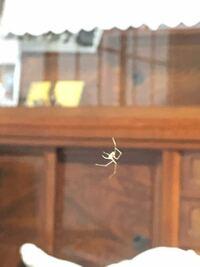 極小サイズの蜘蛛(クモ)。 目に見えるか見えないか際どいくらいの小さいクリーム色のクモを見つけました。  こんなに小さいクモを見たのは初めてで、何という種類なのか気になりました。  詳しい方がいらっしゃれ...
