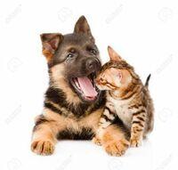 犬や猫のあくびの匂いが好きです。  あくびをすると顔を近づけて嗅いでしまいます。 ついでに指を入れて口を閉じたときに驚くのが好きでたまりません。  同じような人はいますか?