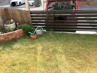ブラックベリーを地植えしようと思うのですが、 写真にあるように、庭の塀(ガレージとの境)に誘引することはできるのでしょうか?  すでに植えてある芝生をちょっと掘り起こして 左の花壇のすぐ脇(ジョウロの横、庭のコンクリートの際の位置)に苗ポットを植えて、塀に蔓を固定すれば右側に伸びていきますか?  塀の高さは地面から80cmで、裏側(ガレージの方)はさらに地面まで高さがあります。  将来的には...