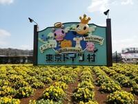 東京ドイツ村は千葉県袖ケ浦市にある施設です。 東京ディズニーリゾート(浦安市)などと同様、東京ではないのに「東京」を名乗っていることで他県の人から「嘘つき」と言われました。 これが原因で千葉県民が嫌...