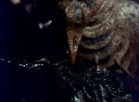 ラドンは餌のメガヌロンが羽化したメガニューラや巨大メガヌロンをも餌食できるでしょうか。 巨大メガヌロンが羽化したメガギラスは天敵のラドンに勝てるでしょうか。 プテラノドンの食べ物は何でしょうか。